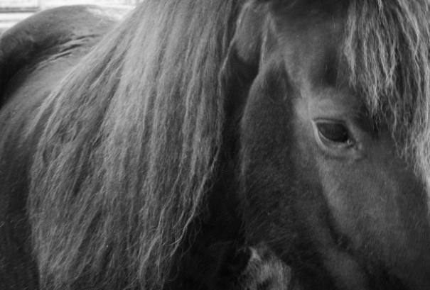 Etienne Das Malende Pferd